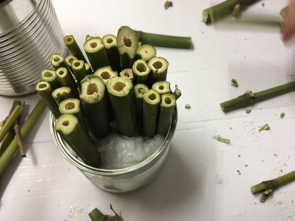 Die Bambus-Abschnitte werden in den Gips gesteckt.