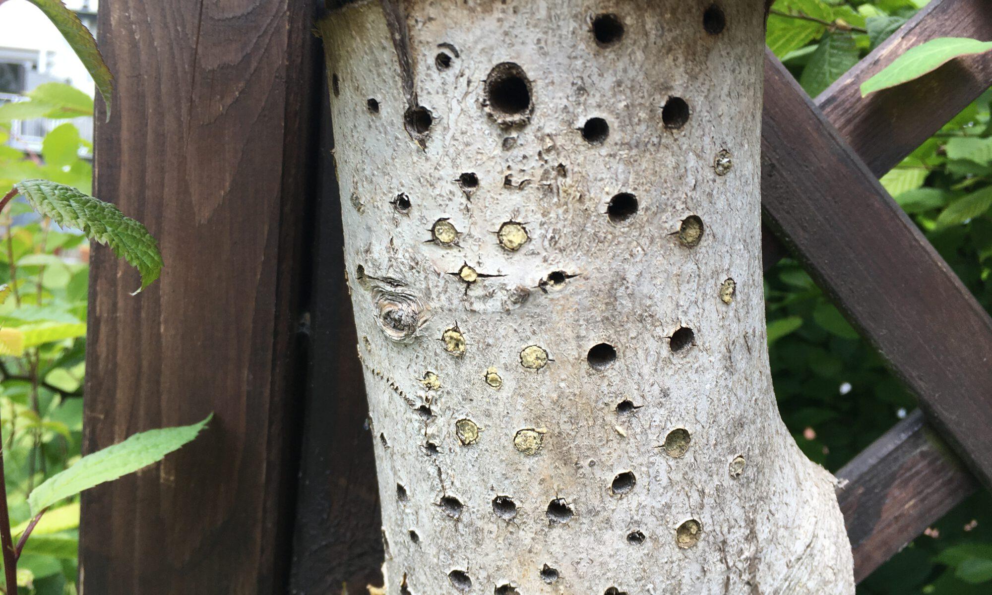 Nisthilfe aus Hartholz